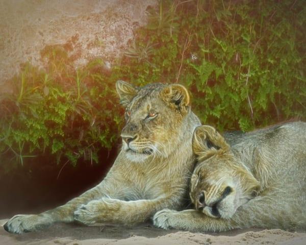 Kenya Lions   7 Photography Art | Images2Impact