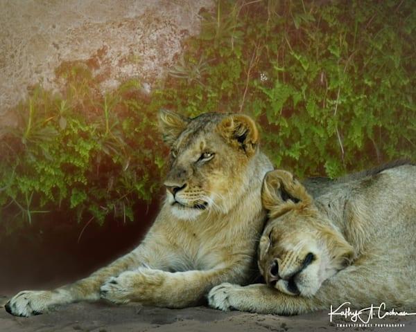 Kenya Lions   8 Photography Art | Images2Impact