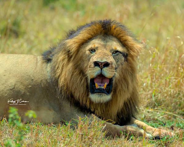 Kenya Lions   4 Photography Art | Images2Impact