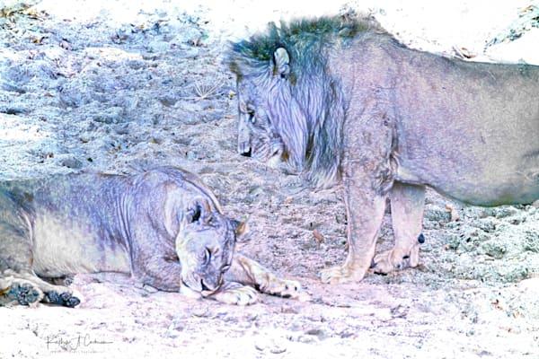 Kenya Lions   9 Photography Art | Images2Impact
