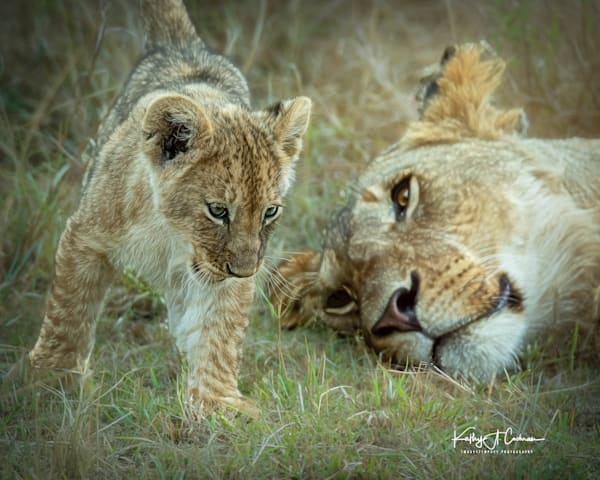Kenya Lions   15 Photography Art | Images2Impact