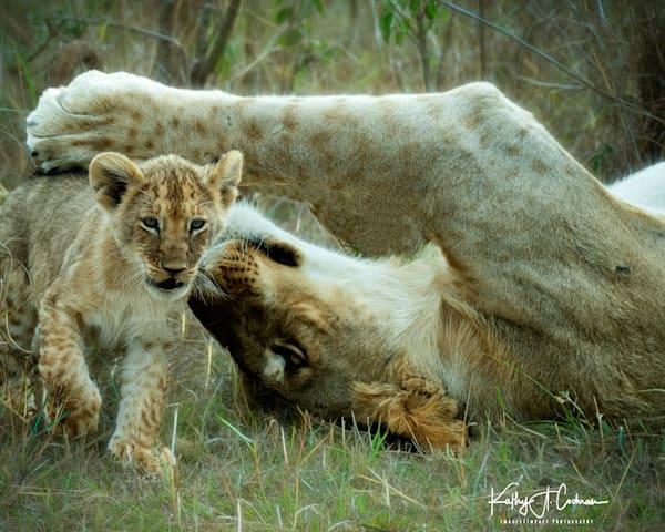 Kenya Lions   11 Photography Art   Images2Impact