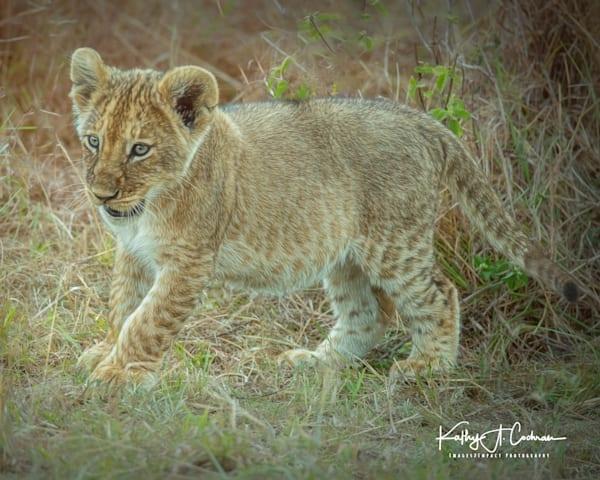 Kenya Lions   16 Photography Art   Images2Impact