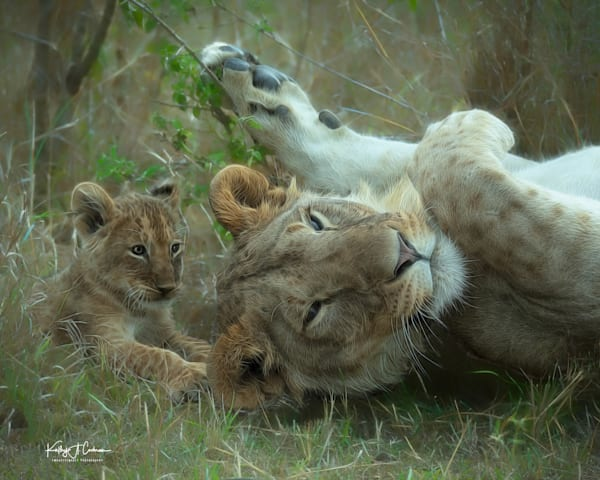 Kenya Lions  7127 Photography Art | Images2Impact