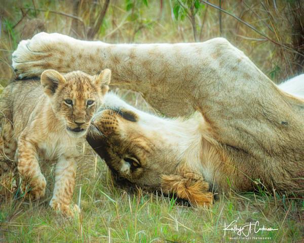 Kenya Lions  7172 Photography Art | Images2Impact