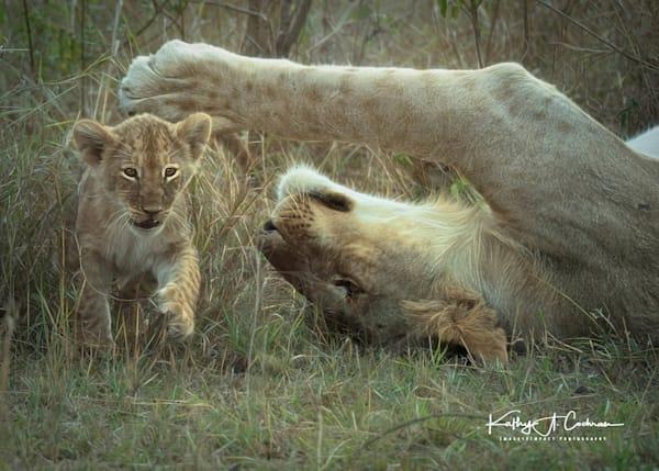 Kenya Lions  7169 Photography Art | Images2Impact