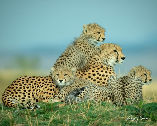 Kenya Cheetah-1