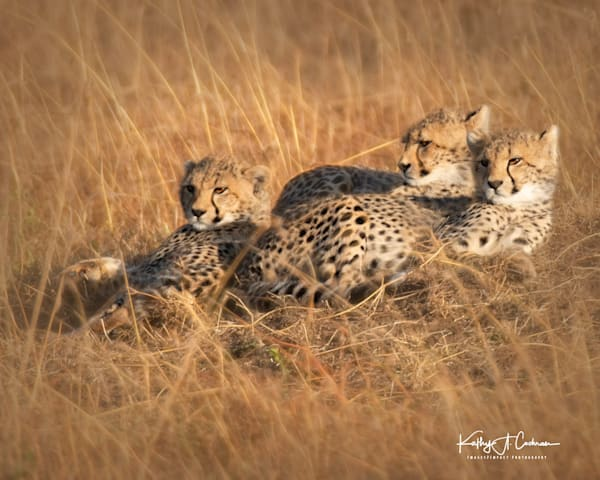 Kenya Cheetah-0761