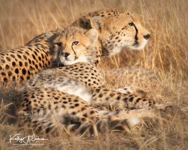 Kenya Cheetah-0914