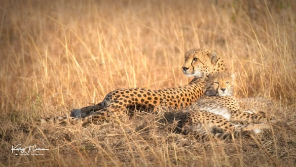 Kenya Cheetah-0917