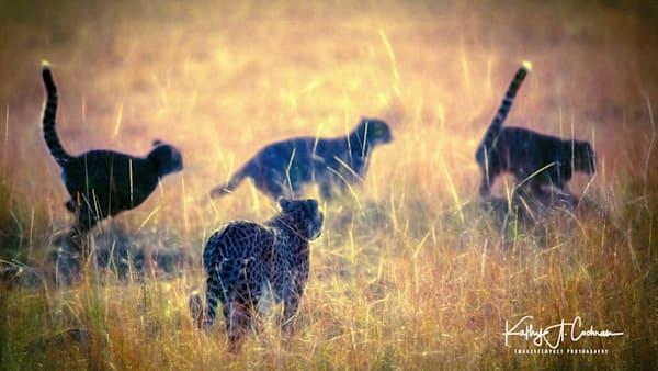 Kenya Cheetah 0324 Photography Art | Images2Impact