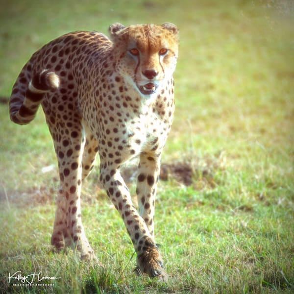 Kenya Cheetah 2604 Photography Art | Images2Impact