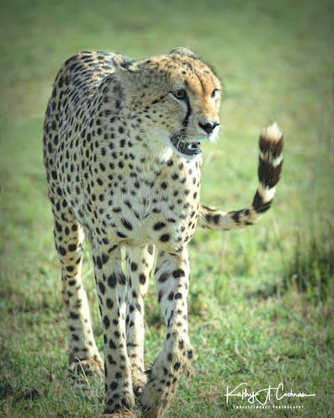 Kenya Cheetah 2605 Photography Art | Images2Impact