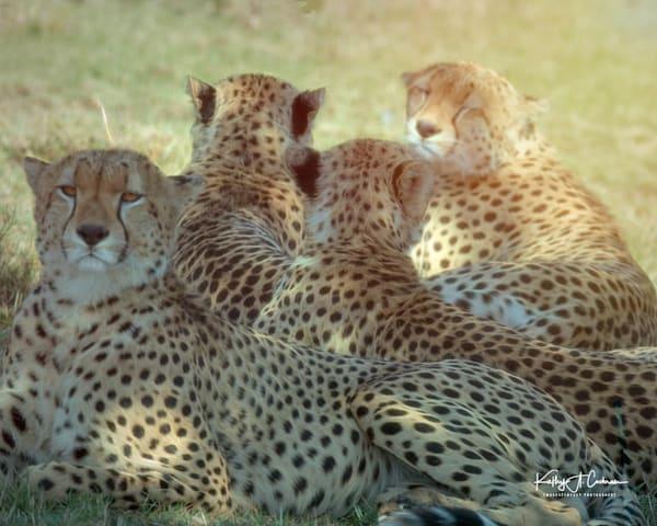 Kenya Cheetah 2653 Photography Art | Images2Impact