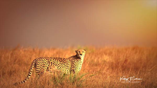 Kenya Cheetah 2773 Photography Art | Images2Impact