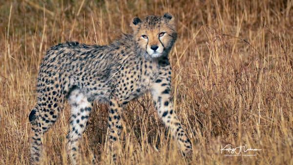 Kenya Cheetah 2834 Photography Art | Images2Impact