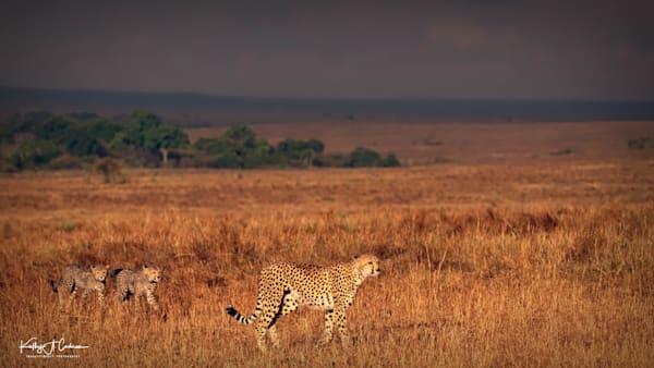 Kenya Cheetah 2815 Photography Art | Images2Impact