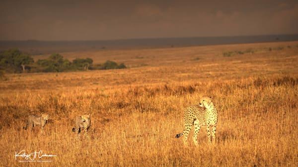 Kenya Cheetah 2824 Photography Art | Images2Impact