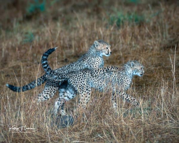 Kenya Cheetah 2906 Photography Art | Images2Impact