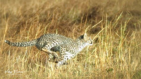 Kenya Cheetah 2933 Photography Art   Images2Impact