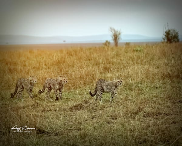 Kenya Cheetah 3078 Photography Art | Images2Impact