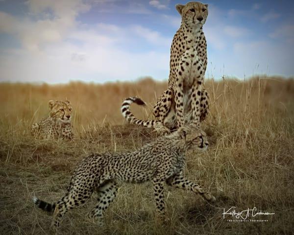 Kenya Cheetah 3143 Photography Art   Images2Impact