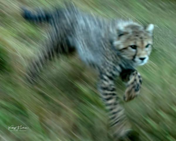 Kenya Cheetah 3587 Photography Art   Images2Impact