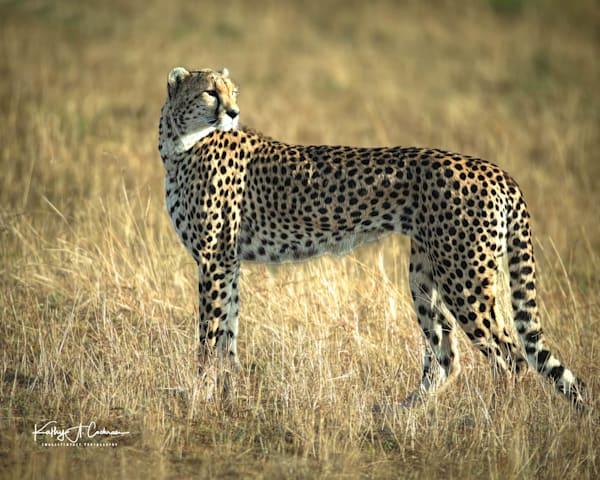 Kenya Cheetah 3810 Photography Art   Images2Impact
