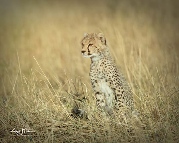 Kenya Cheetah-3829