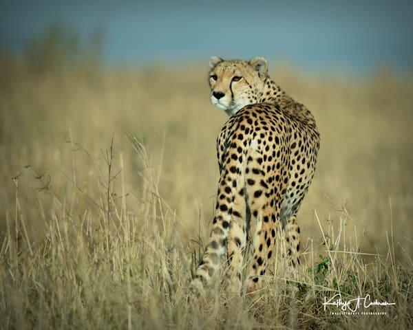 Kenya Cheetah 3850 Photography Art   Images2Impact