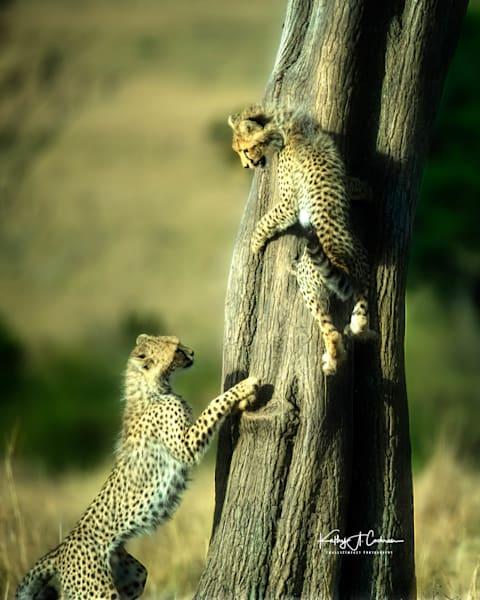 Kenya Cheetah 4008 Photography Art | Images2Impact