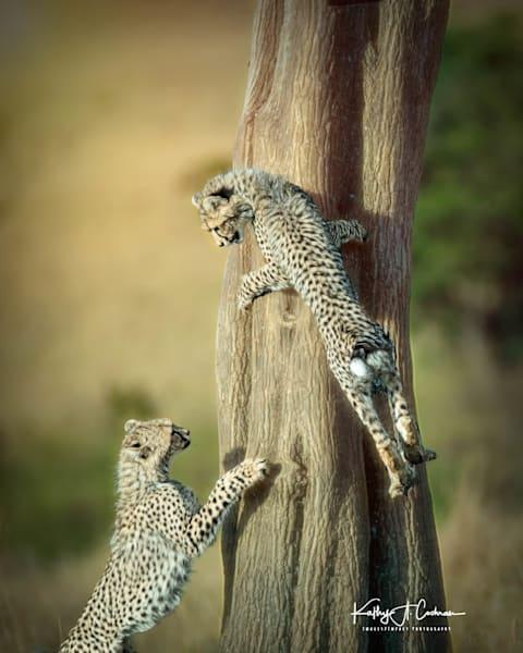 Kenya Cheetah 4009 Photography Art | Images2Impact