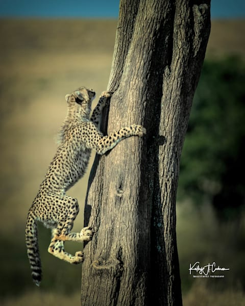 Kenya Cheetah 3973 Photography Art | Images2Impact