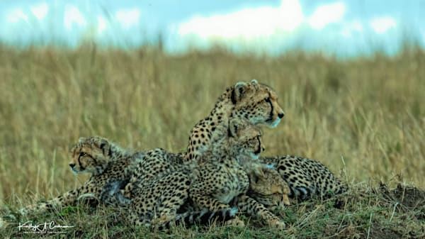 Kenya Cheetah 5333 Photography Art | Images2Impact