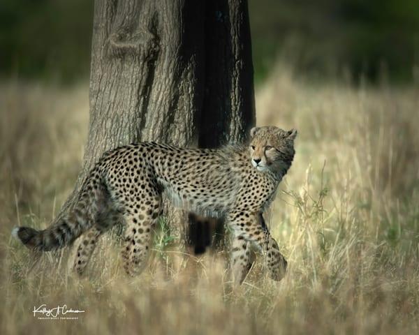 Kenya Cheetah 4021 Photography Art | Images2Impact
