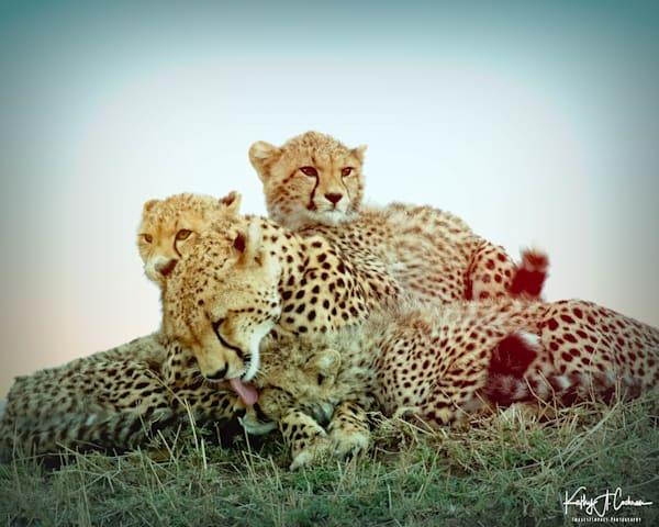 Kenya Cheetah 5513 Photography Art | Images2Impact