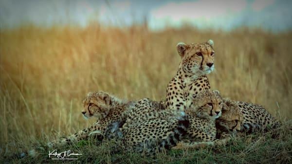 Kenya Cheetah-5345