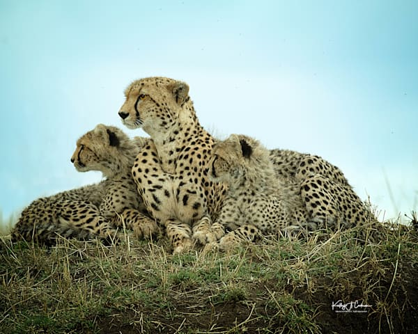 Kenya Cheetah 5543 Photography Art | Images2Impact