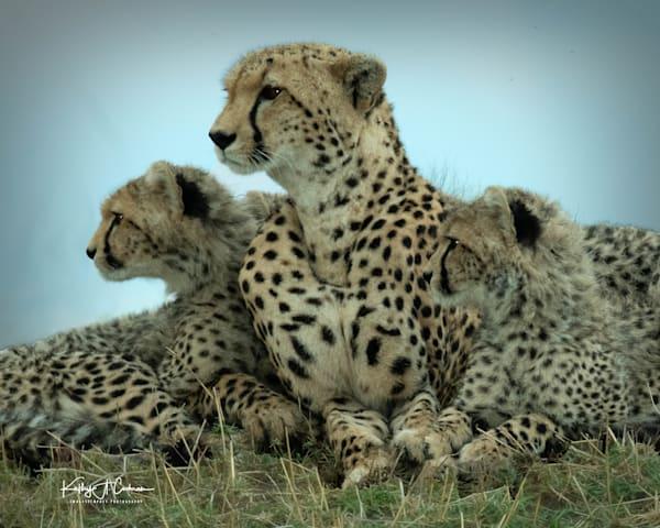 Kenya Cheetah 5544 Photography Art | Images2Impact