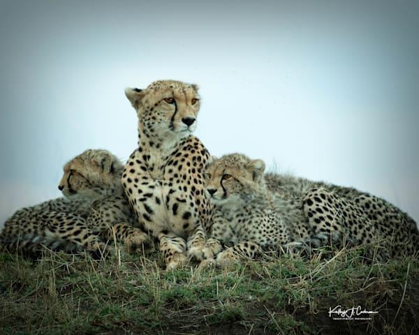 Kenya Cheetah 5551 Photography Art | Images2Impact