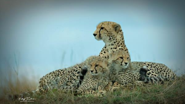 Kenya Cheetah-5630
