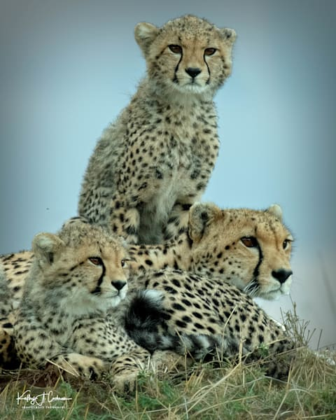 Kenya Cheetah 5473 Photography Art | Images2Impact