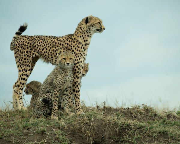Kenya Cheetah 5695 Photography Art | Images2Impact