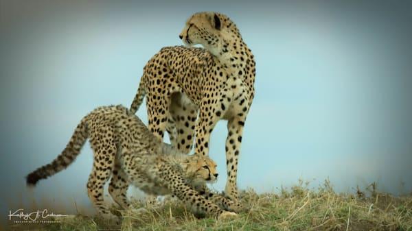 Kenya Cheetah 5676 Photography Art | Images2Impact