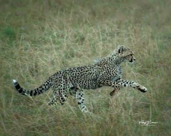 Kenya Cheetah 5786 Photography Art | Images2Impact