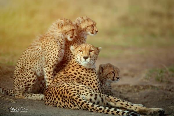 Kenya Cheetah-6239