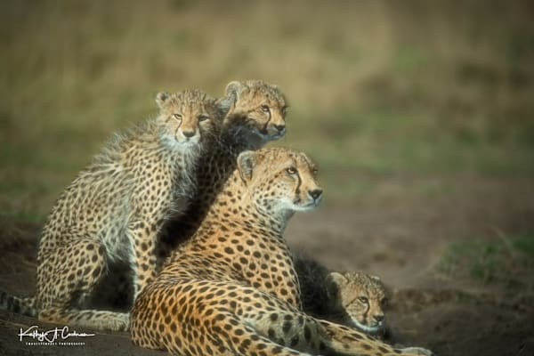 Kenya Cheetah-6249