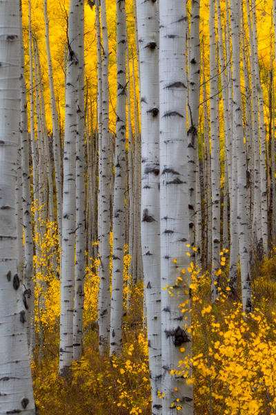 Aspen | Robbie George Photography
