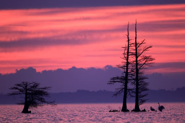 Morning Dawn Nature Photography Prints | Robbie George