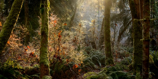Magical Mystery Forest